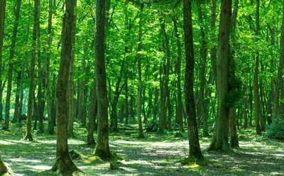 木製のフルレンジスピーカーの事なら【高井工芸】へ~木がもたらす効果とは?~